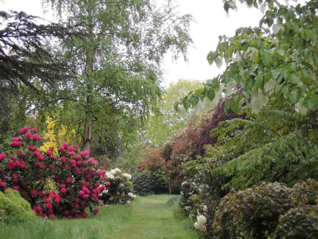 Mixed shrubs