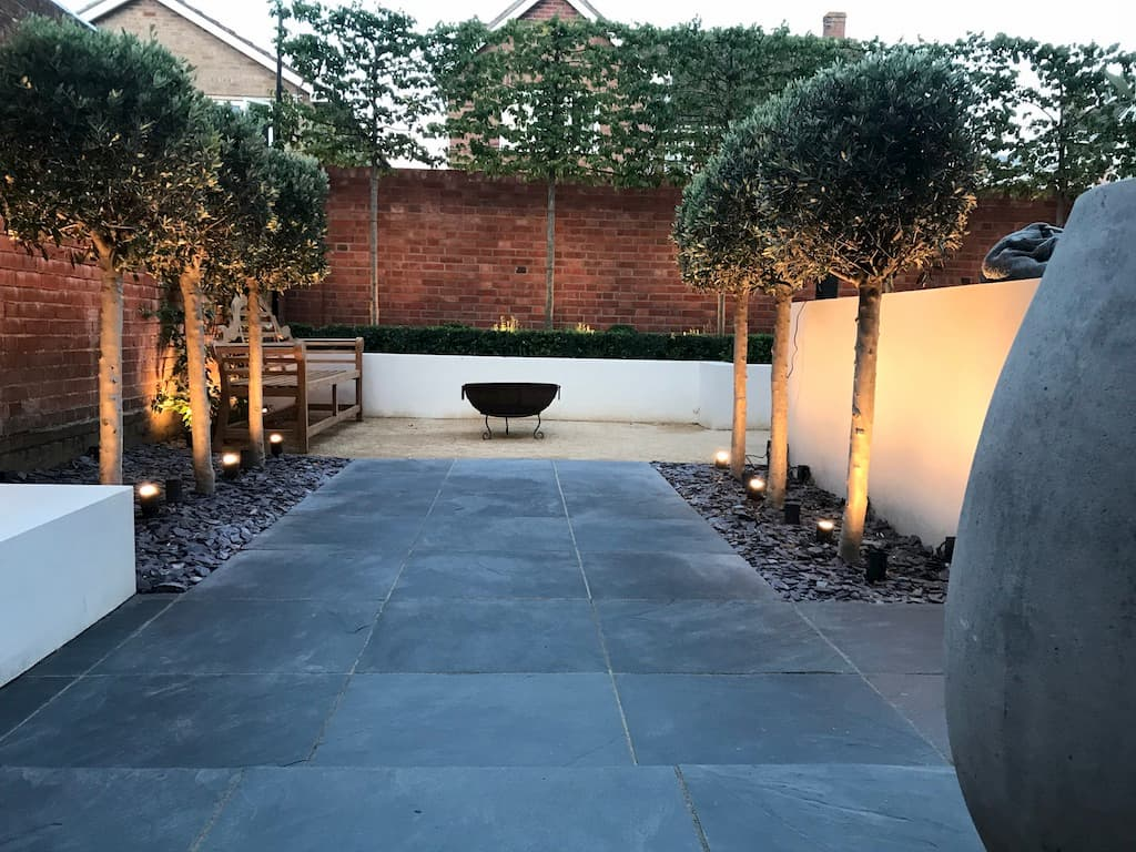 screening with pleached trees